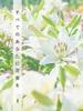 【ハイファンタジー】【ローファンタジー】すべてのあなたに花束を 1