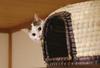 【詩歌】【その他】ポストカード_へちま(猫)ちぐらからチラッ(写真のみ)