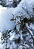 【ハイファンタジー】【詩歌】【新刊】7's Favorite First Snow(仮)