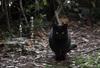 【詩歌】【その他】ポストカード_黒猫