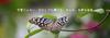 【詩歌】【その他】しおり_羽の欠けた蝶