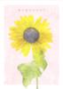 【恋愛】【学園】【現代】咲き誇れひまわり