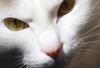 【詩歌】【その他】ポストカード_へちま(猫)どアップ(写真のみ)