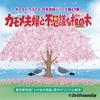 【その他】(ボイスドラマ CD) 日本民話シリーズ  第47弾   『カモメ夫婦と不思議な桜の木』