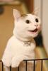 【詩歌】【その他】ポストカード_へちま(猫)おやつ鳴き(写真のみ)