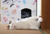 【詩歌】【その他】ポストカード_へちま(猫)へそ天(写真のみ)