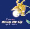 【百合】フラワーズ2 Morning star Lily