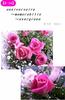 【R-18】anniversaire〜memorabilia〜evergreen