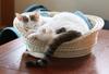 【詩歌】【その他】ポストカード_へちま(猫)ちぐらですやすや(写真のみ)