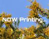 【ライトノベル】【ハイファンタジー】【短編集】【現代・和風】【甘め】日の照る春の内側で