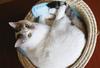 【詩歌】【その他】ポストカード_へちま(猫)ちぐらで上目遣い(写真のみ)