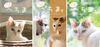 【ノンフィクション】【その他】へちま まるごとセット(猫写真集3冊)
