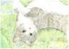 猫たちのエトセトラ 【会誌・会報・合同誌】