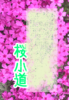 【300SSラリー】桜小道
