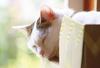 【詩歌】【その他】ポストカード_へちま(猫)段ボールのお城ですやすや(写真のみ)