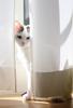 【詩歌】【その他】ポストカード_へちま(猫)ちらり(写真のみ)